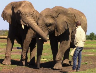 Plett-Elephant-sanctuary-1
