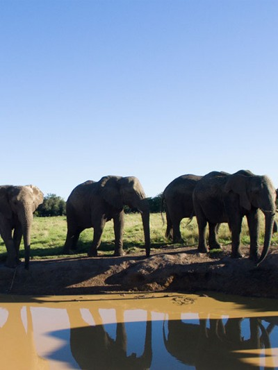 Elephant-sanctuary-plett-8